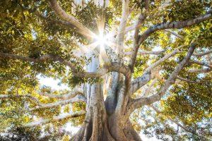 tree: light media low res cut